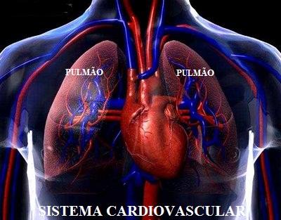 Alcool e o Sistema Cardiovascular