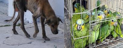 Maus-tratos-de-animais.jpg